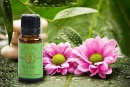 Essential Oil: Tea Tree